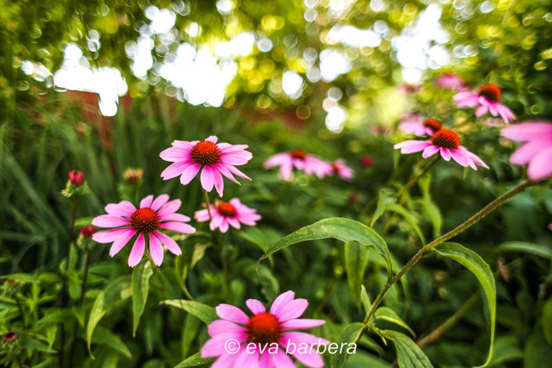 fiori a venezia